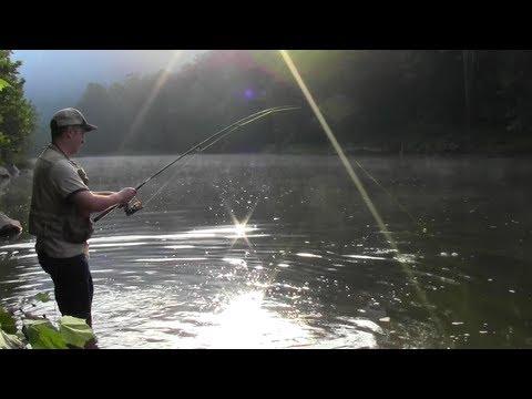 How to catch 50 bluegills in 4 hours