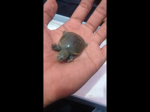 Feeding My Baby Tortoise