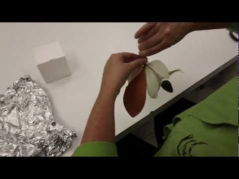 Making a Southern Magnolia Leaf and Bud out of Gumpaste
