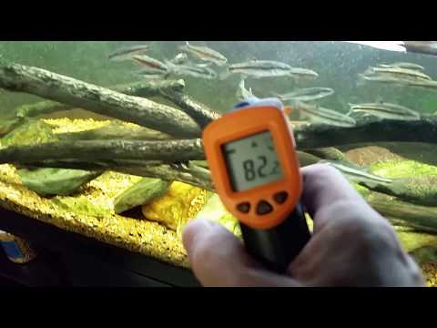 Coldwater Fish In warm Water? A Look At My Tank Temperatures