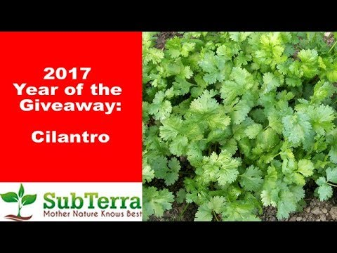 Is Cilantro the Ultimate Multi-Use Herb? ** Giveaway video **