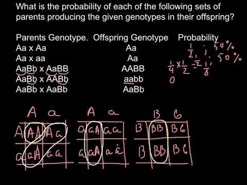 What is the probability to get specific genotype as result of the cross of the parent's genotypes