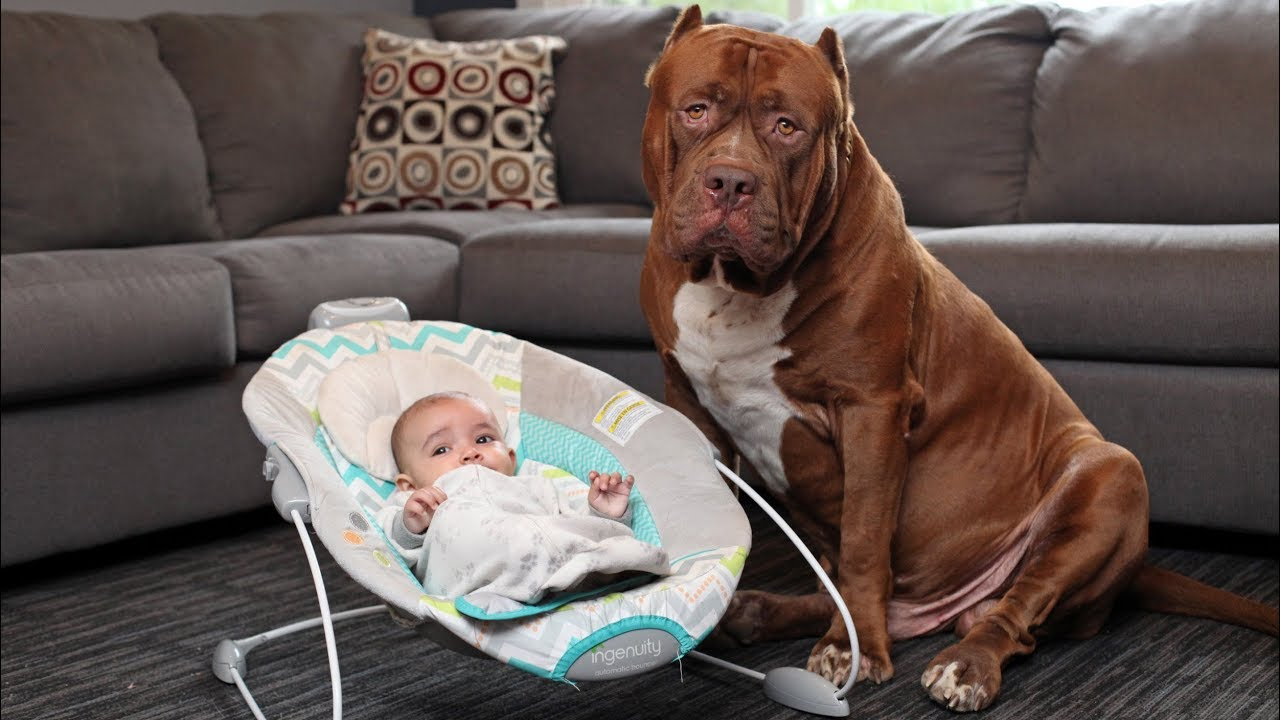 Amazing Dogs Meet Newborn Babies First Time   Dog Love Baby Video Compilation
