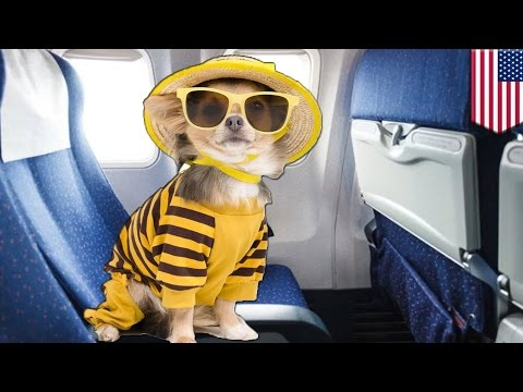 Pets on a plane: Stop pretending your pets are service or emotional support animals
