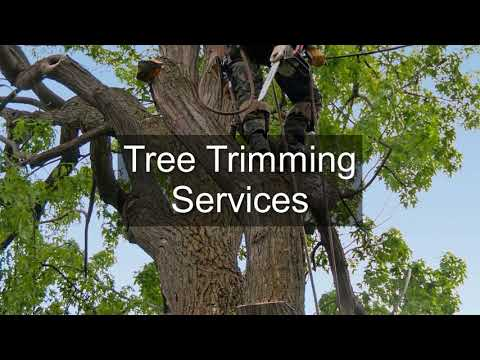 Radzi Tree Fellers Johannesburg - Call Us: 079 621 7713