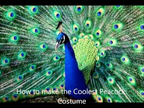 How to make the Coolest Peacock costume