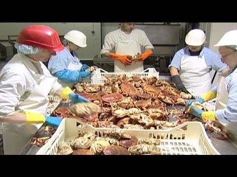 Crab Processing | 04