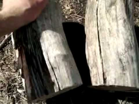 Eating termites in firewood and heavy duty post puller