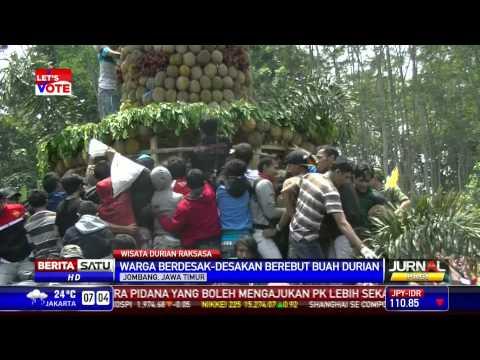 Ribuan Warga Jombang Berebut Durian Raksasa