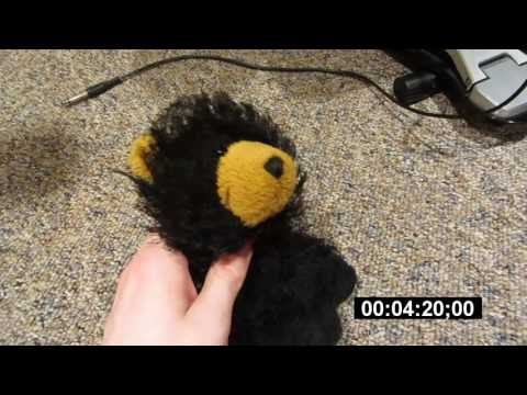 Beary's Audition Tape