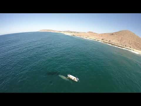 Whale saved by paramotor pilot (Tom Martin) near Cabo San Lucas