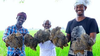 ANGRY BIRDS Curry | Quail Curry Cooking in Village | Tasty Village Food Recipe Cooking by Grandpa