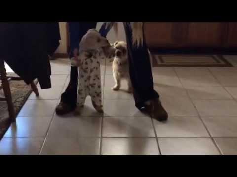 Onesie on a puppy