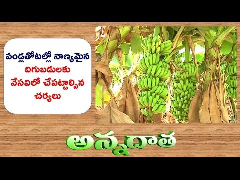 Management Practices in Different Fruit Orchards in April -May  || ETV Annadata