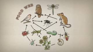 Why are insects important?