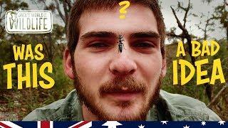 Download yep I GOT STUNG!! Worse than a BULLET ANT? Bluebottle Wasp | Australia Series | Video