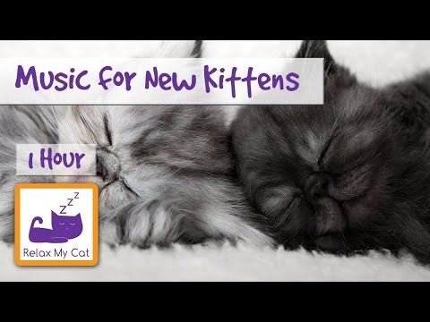 Relaxing Music for Brand New Kittens! Ease Your Kitten into their New Home with Soothing Cat Music!