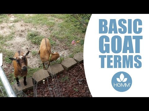 How to Speak Goat: Terms You Should Know about Pet Goats