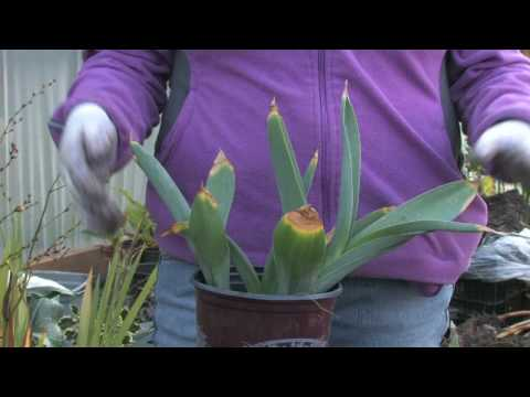 Plant Care & Gardening : When to Trim Tulips