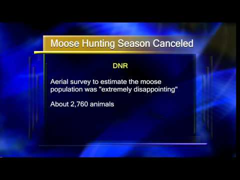 Moose Hunting Season Canceled in MN - Lakeland News at Ten - February 6, 2013
