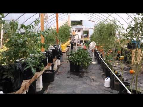 Getting Control Of A Neglected Greenhouse!