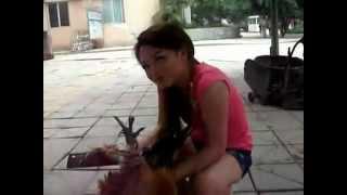 Merv the Goat | Music Jinni