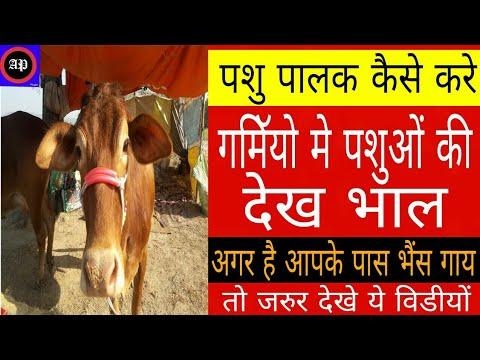 गर्मियों में पशुओं की देखभाल | Pashupalan Hindi | पशुपालन कैसे करे