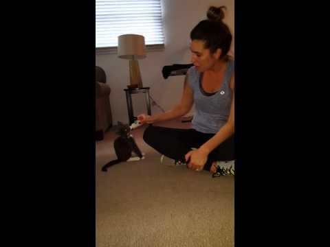 Kitty bites off nipple of milk bottle