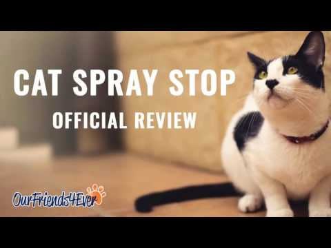 Learn How to stop cat spraying indoors best techniques - cat spraying in house- Official Review
