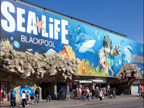 Sea Life Centre Blackpool - June 2017