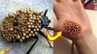 इन 10 सबसे खतरनाक कीड़ों को पहचान लो   10 Most Dangerous Insects in the World