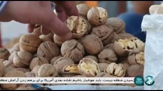 Iran Walnut gardens & people, Touyserkan county مردم و باغ هاي گردو شهرستان تويسركان ايران