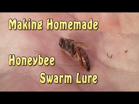Homemade Honeybee Swarm Lure (Bee Bait)