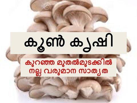 koon krishi| Mushroom Cultivation malayalam| Benefits of mashroom