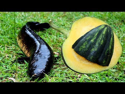 Village Food - Cooking Sole Fish Head with Pumpkin recipe | Delicious Big Fish Head Cooking