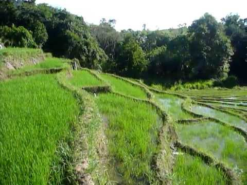 Sri Lanka,ශ්රී ලංකා,Ceylon,Beautiful Rice Paddy Terraces (07)