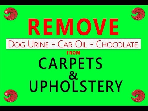 Mega Steam Clean | Carpet Cleaning Stain Removal Tips Vol.  3 | Dog Urine - Motor Oil - Chocolate