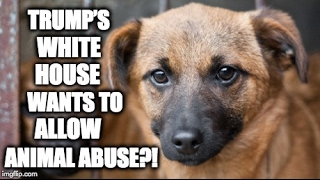 Trump's White House Wants To Allow Animal Abuse?!