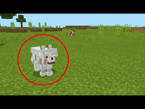 how to spawn a wolf with armor in minecraft