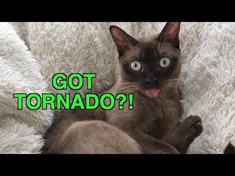 Tornado Siren?! Cat Reacts to Emergency Warning Alert System!