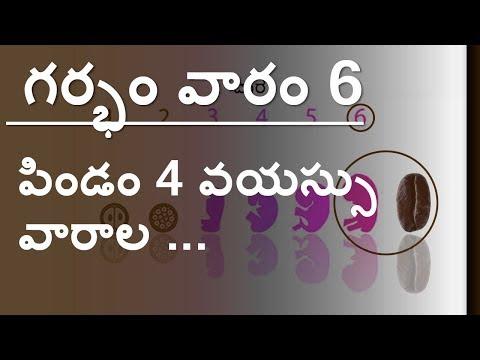 Pregnancy   Telugu   Week by week   Week 6  