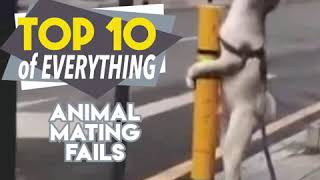 10 animal fails video || mating fails video