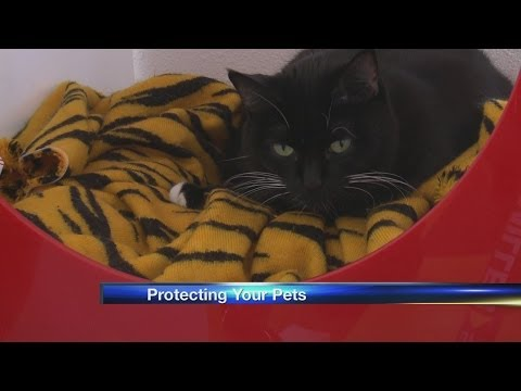 How to keep your pets warm in the winter