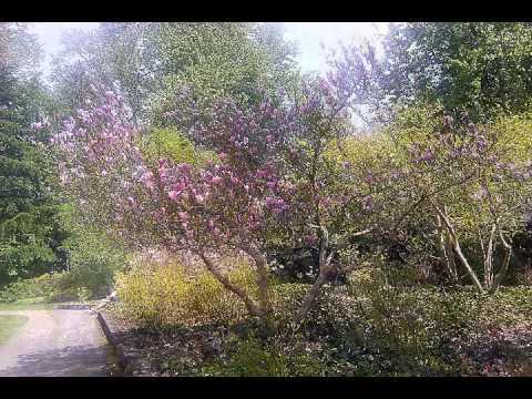 02 Summer Magic: Magnolia: Nurture and Nature