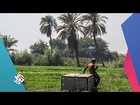 Xxx Mp4 بتوقيت مصر نقيب الفلاحين يصف استيراد الأرز بالكارثة 3gp Sex