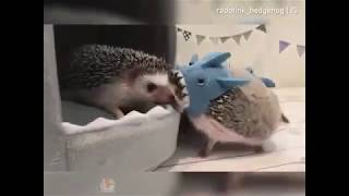 Funny Cute Animals 2018 Compilation 01