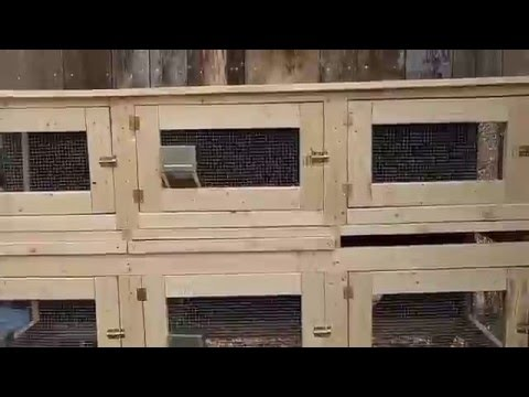 YOUTUBE RABBIT HUTCH VIDEO for youtube