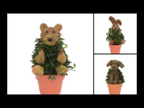 How to care for your Mossed Animal Ivy Topiary
