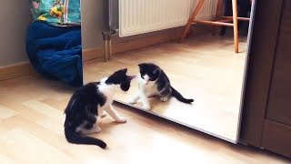 Cats vs. Mirrors 😹 Funny Cats Reaction With Mirrors (Part 2) [Funny Pets]