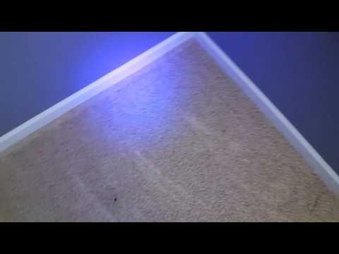 Finding pet urine with blacklight - Thorough home inspection - Rendall's Cleaning